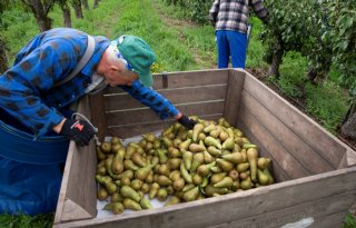 Mentale steun voor worstelende Limburgse fruitteler