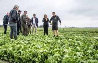 'Ganzenpopulatie Noord-Holland loopt uit de klauwen'