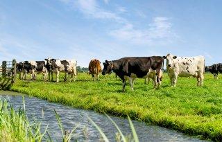 Stikstofuitspraak+maakt+veehouders+onzeker+over+toekomst