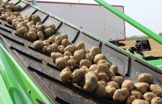 Weinig vraag naar vrije aardappelen