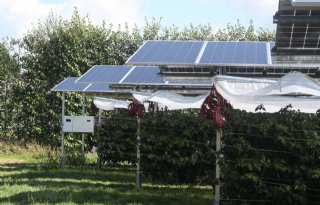 Consortium test zonne-energieprojecten boven gewasteelten