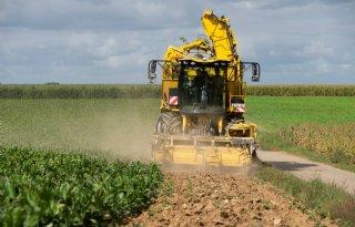 Sensus: 'Dit jaar mislukte ruim 200 hectare cichorei'