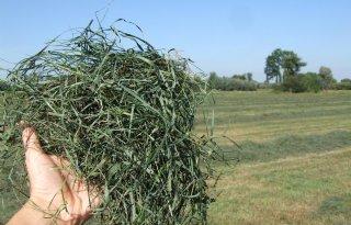 Eurofins+Agro%3A+%27Broei+ligt+op+de+loer+bij+droge+zomerkuil%27