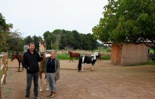 Paarden+gedijen+goed+in+actiefstal+na+wenperiode