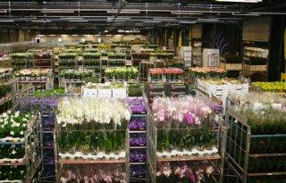 FloraHolland+moderniseert+locatie+Eelde