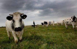 Gelderse VVD en ChristenUnie: 'Verpacht natuurgrond lokaal'