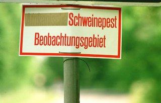 Nog+vijf+wilde+zwijnen+positief+in+Brandenburg