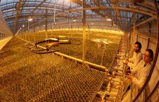 Drone raakt ingeburgerd in glastuinbouw