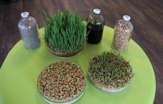 Coating voor zaden en mestkorrels uit afvalwater