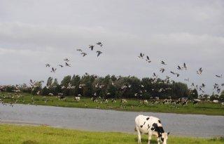 Overijssel+past+omgevingsvisie+aan+over+weidevogels