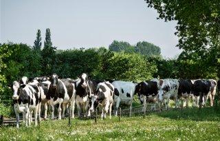 Drenthe presenteert acht boerenambassadeurs