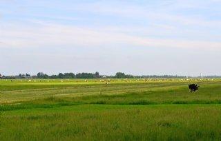 Amstel%2C+Gooi+en+Vecht+start+onderzoek+grondwaterstanden