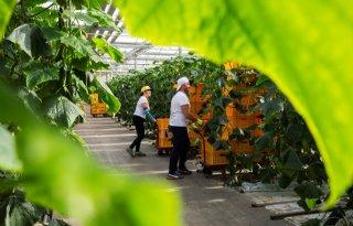 Corona+stuwt+arbeidsgebrek+tuinbouw
