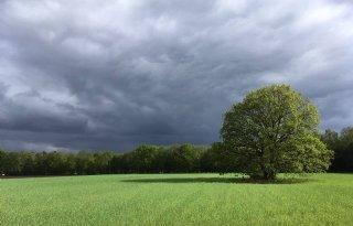 Utrechtse boeren gevraagd mee te denken over Groene Contour