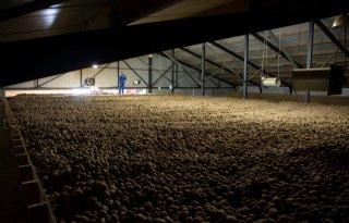 Meer+aardappelen+op+voorraad+in+Belgi%C3%AB