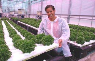Aardwarmtevis+voedt+plant+in+tuinbouwproef