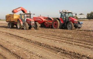 Termijnmarkt aardappelen stabiel op minimaal 7 euro