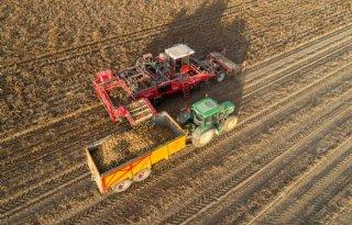 Belgi%C3%AB+verwerkt+5%2C3+miljoen+ton+aardappelen+in+2019