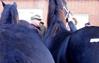 Minder+paarden+op+jubilerende+Hedel+Markt