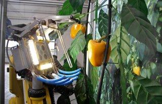 Online+meetings+over+robotica+in+glastuinbouw