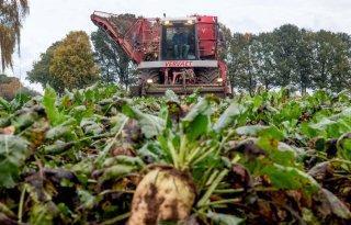 Suiker Unie: 'Begin op tijd met bladschimmels spuiten'
