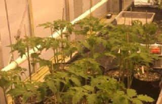 Innovatiefonds+steunt+plantvoeding+met+micro%2Dalgen