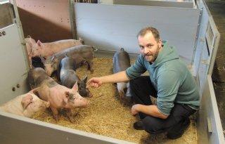 Nieuw+systeem+voor+dagontmesting+varkensstallen