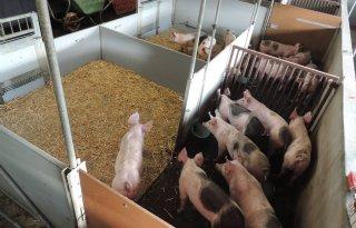 Vijf+vragen+over+het+varkenstoilet