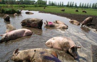 Belgische+landbouwareaal+voor+7+procent+biologisch