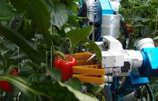 Een+op+tien+glastuinders+gebruikt+robot