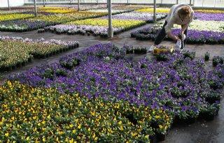 Duurzame+bloem%3F+Consument+zegt+vaker+ja%21