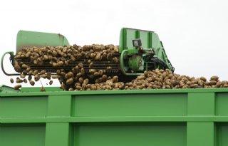 Belgische+aardappeloogst+bovengemiddeld