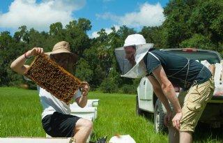 WUR%3A+het+gaat+niet+slecht+met+de+honingbijen