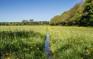 Lokale+Europese+biodiversiteit+verandert+in+snel+tempo