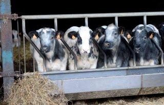 Vlaamse+landbouwminister%3A+minder+dieren+hypocriet