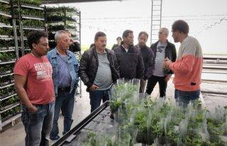 Glastuinbouw+Gelderland+zoekt+werknemers