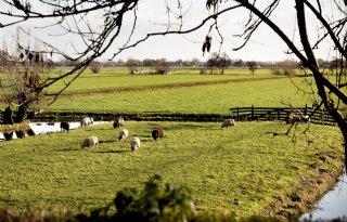 Nieuwe Europese verordening biolandbouw jaar uitgesteld