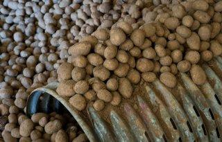 Aardappelvoorraad+is+hoger+dan+meerjarig+gemiddelde