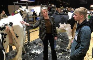 Goed scheren om koe te presenteren