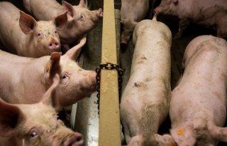 Countus%3A+%27TVL%2Dregeling+moeite+van+overwegen+voor+varkenshouder+waard%27