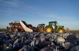 Bewaarkool+laat+zich+machinaal+oogsten