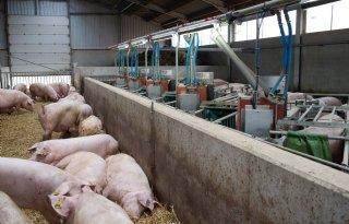 Raadsleden+blijven+weg+uit+varkensstal