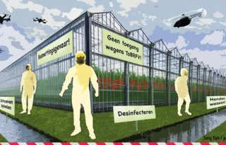 Tomatensector blijft in ban van ToBRFV-virus