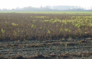 Kritiek+op+onteigenen+Friese+grond+voor+natuur