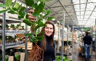 Kwekerij+VDE+Plant+wortelt+in+glas