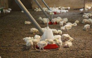 Vleeskuikenhouder+richt+zich+op+kringlooplandbouw