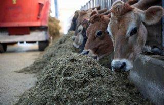 Boer Bart trekt grens bij natuurinclusief boeren