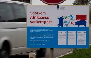Afrikaanse+varkenspest+vastgesteld+in+Brandenburg