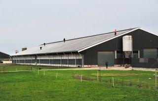 Een+derde+van+de+melkveehouders+heeft+zonnepanelen