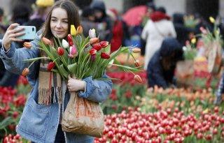 Ruim 15.000 mensen plukken tulpen op de Dam